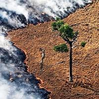 Con la devastadora situación en el Amazonas, los incendios forestales aumentaron más del 80% este año en Brasil