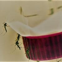 El dengue en las Américas marca un nuevo récord con tres millones de casos