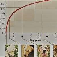 ¿Qué edad tiene tu perro en años humanos? Una nueva fórmula mejor que multiplicar por siete