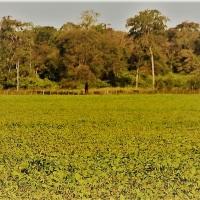 Consecuencias de la expansión agropecuaria: un análisis desde la ciencia