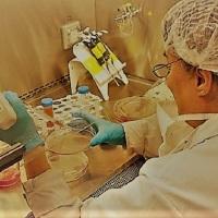 Investigadores argentinos logran neutralizar el SARS-CoV-2 con anticuerpos derivados de llamas y huevos