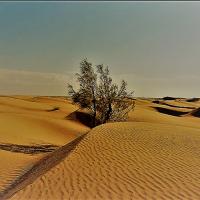 Hallan miles de millones de árboles solitarios en el desierto del Sáhara
