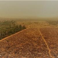 La Amazonia emitió más CO2 de lo que absorbió